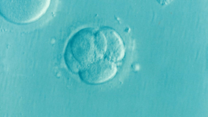 New advancements in IVF