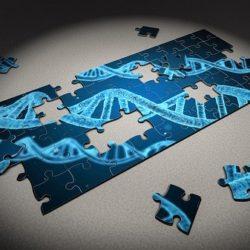 Img Puzzle Gene for Gene modification promotes fertility tourism